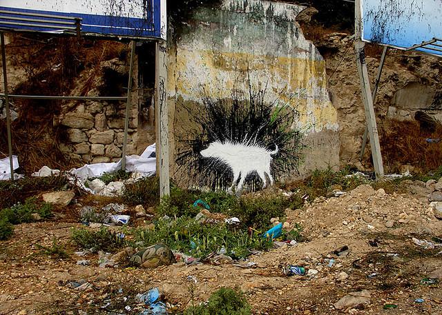 Graffiti Wet Dog